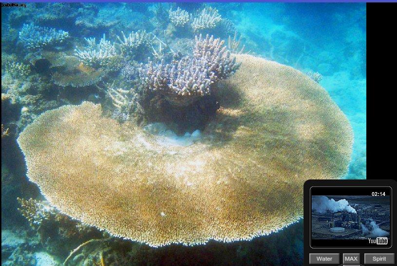 coral_fiji