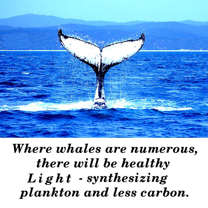 whale_o2_pump
