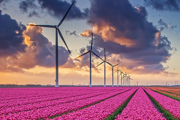 Wind turbines and tulip fields in North Holland, Netherlands.  border=