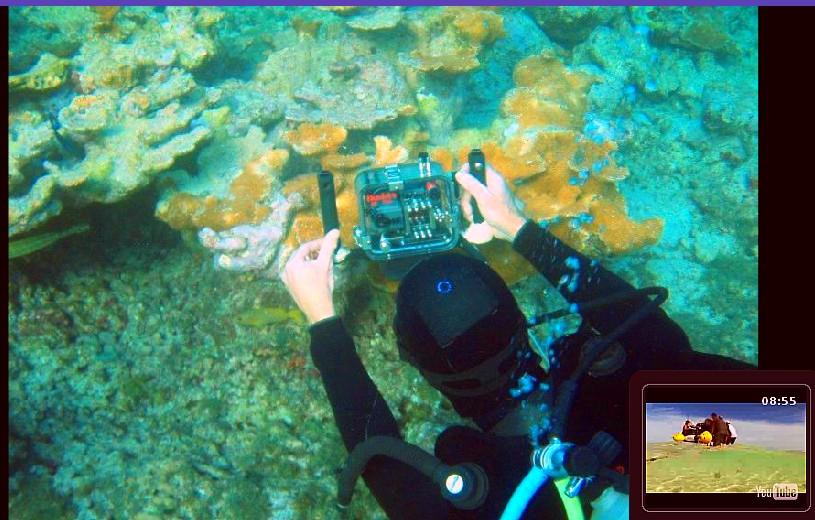 coral reef - elkhorn Ken