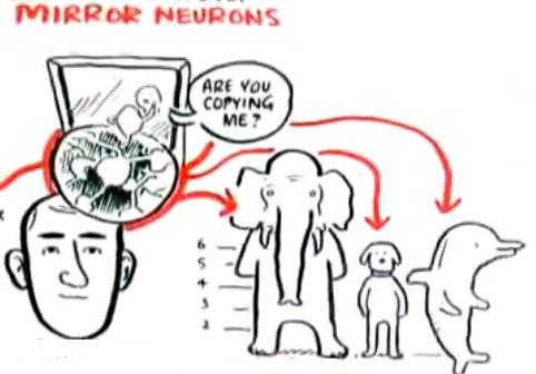 mirror neurons...