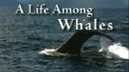 whales, roger payne